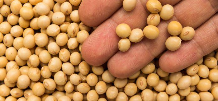 Brasil deve se tornar o maior produtor de soja do mundo em 2020