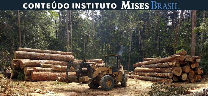 Por que proibir o Brasil de explorar suas florestas? – E o exemplo sueco