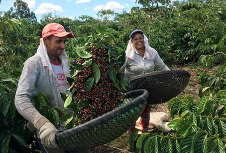 ESPECIAL-Água, tecnologia e uma pitada de pimenta: café capixaba deixa a seca para trás