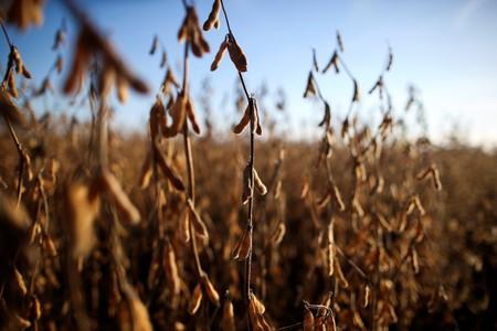 Terra cara limita expansão de área de soja no Brasil e produtor foca na produtividade