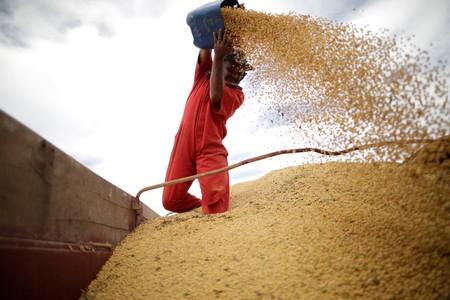 Clima adverso reduz produtividade da soja em Mato Grosso, dizem produtores